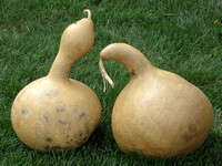 Margaret Mead's Gourds