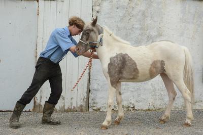 Sam A. Malek: Farm Life &emdash; Amish Boy & Pony